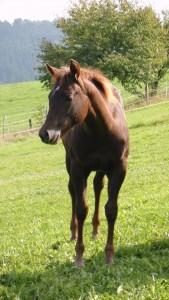 Pferde 23.09.2013 033